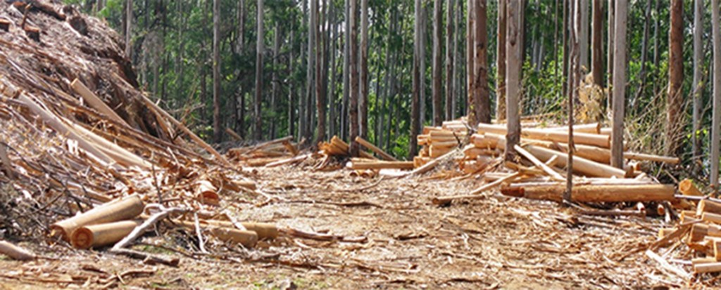Industrial Tree Plantations Invading Eastern and Southern Africa