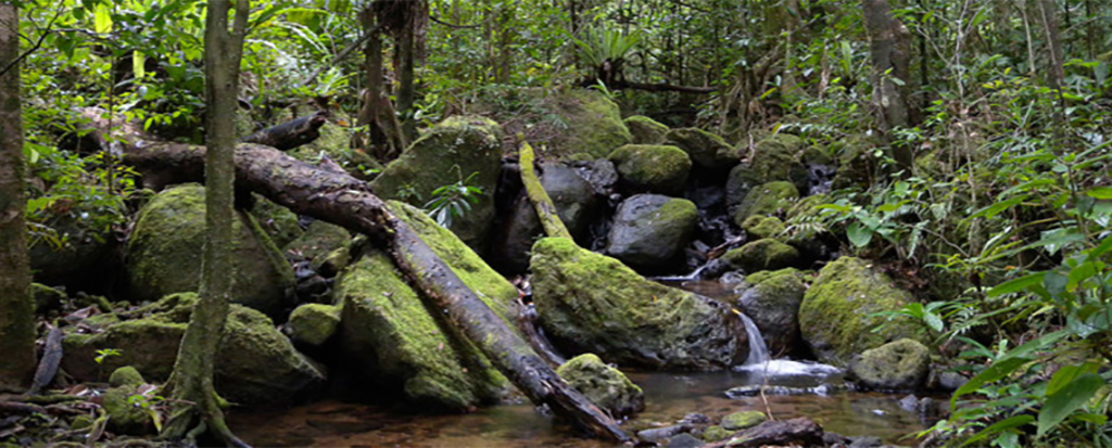 lowland_rainforest_masoala_national_park_madagascar-1140x460