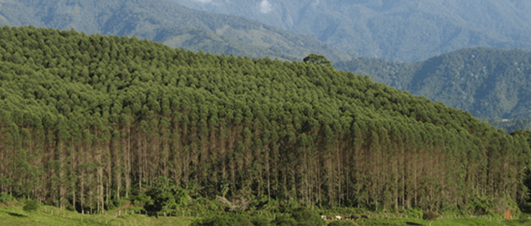 What's Driving Tree Plantation Expansion in Latin America, Africa and Asia?