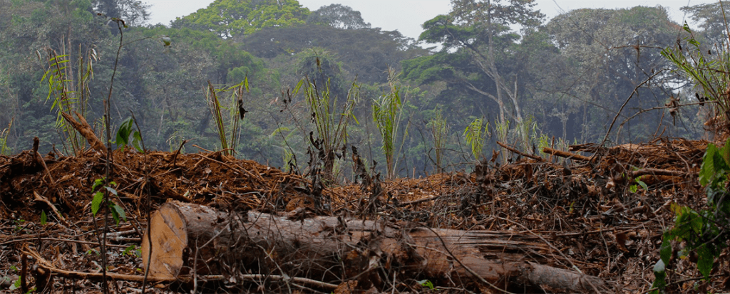 Controversy Over Logging Plans in the Democratic Republic of Congo