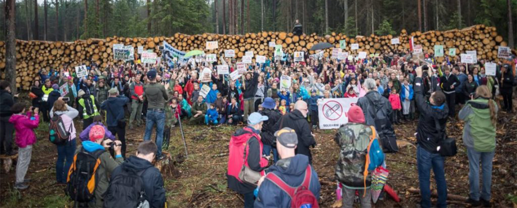 Why is This Forest So Important? Resisting the Logging of Białowieża