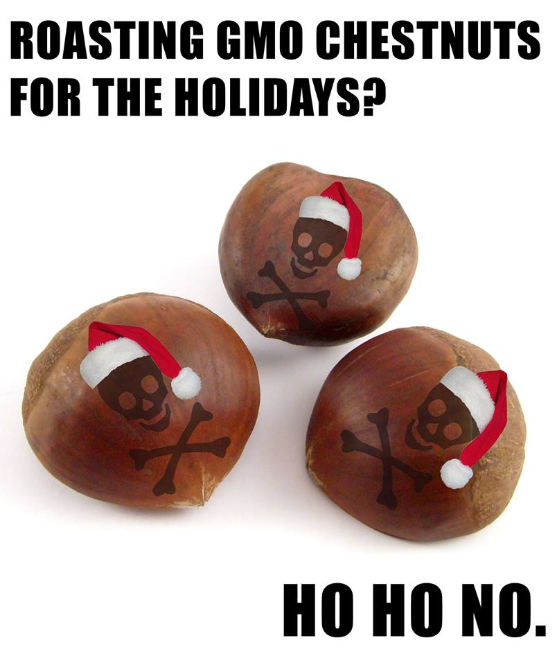 Violating the Sacred: GMO Chestnuts for the Holidays?