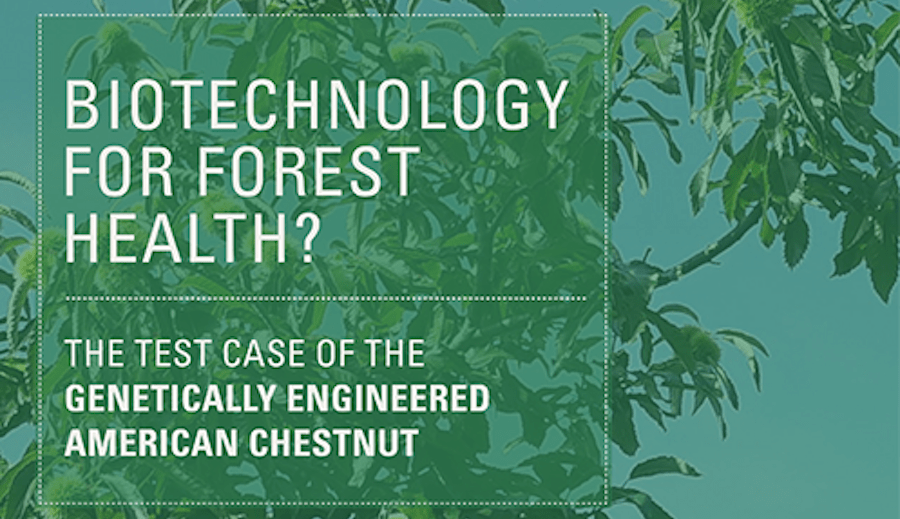 Major New White Paper on GE American Chestnut Released