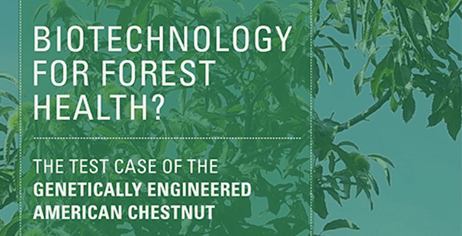 Major New White Paper on GE American Chestnut Released