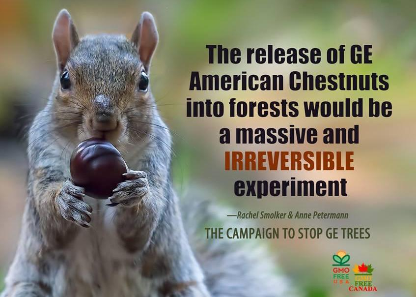 Sign the petition! Stop the Unregulated Release of GE Trees into Wild Forests