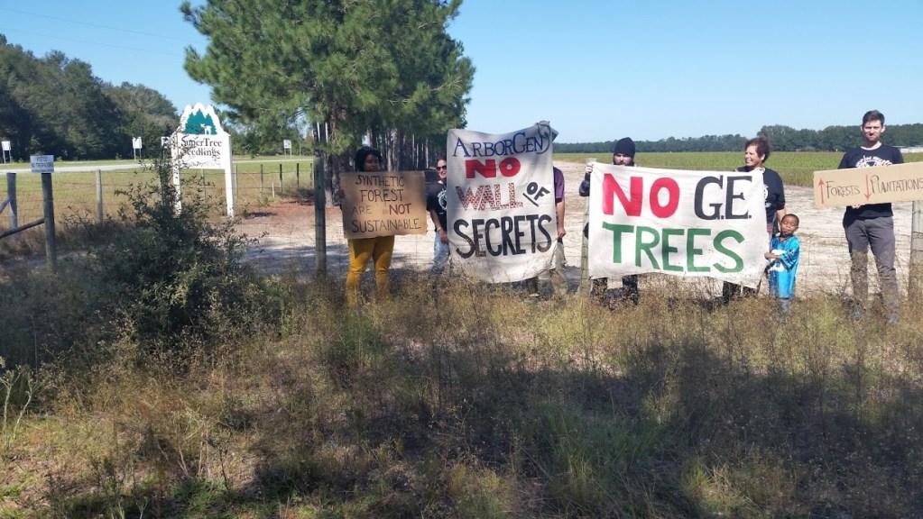 Scientists Claim to Engineer Pollution-Free Poplar Tree