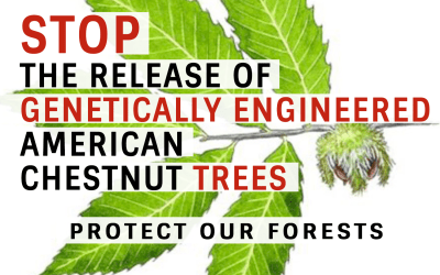 For Immediate Release: Environmental Groups Representing Millions Oppose Request to Allow Planting of Genetically Engineered Trees in Forests as USDA Opens Public Comment Period