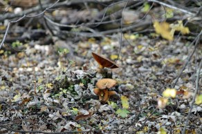 Great Meadows Fungus 1