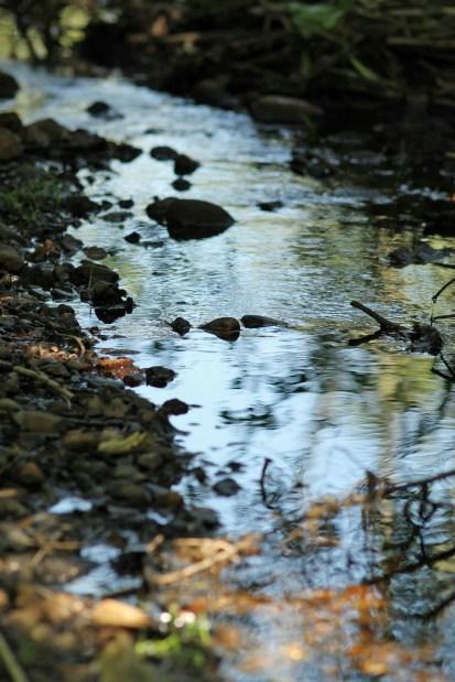 Running Brook-Ipswich Audubon