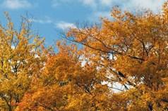 Turning Leaves 3