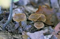 Horn Pond Fungus 4