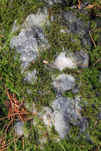 Maine Moss 2