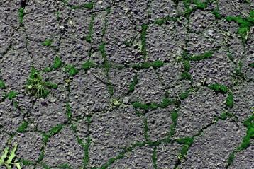 Street Moss 12