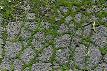 Street Moss 13