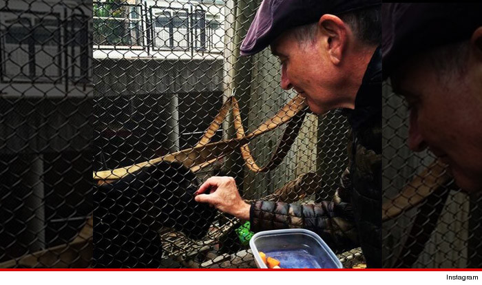 Robin Williams handing a Kleenex to a Masturbating Bonobo Moneky named after him.