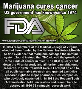 Marijuana-cures-cancer