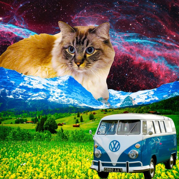 Cat with VW Van