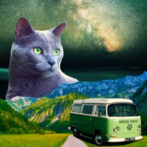 sage colored vw with gray kitty