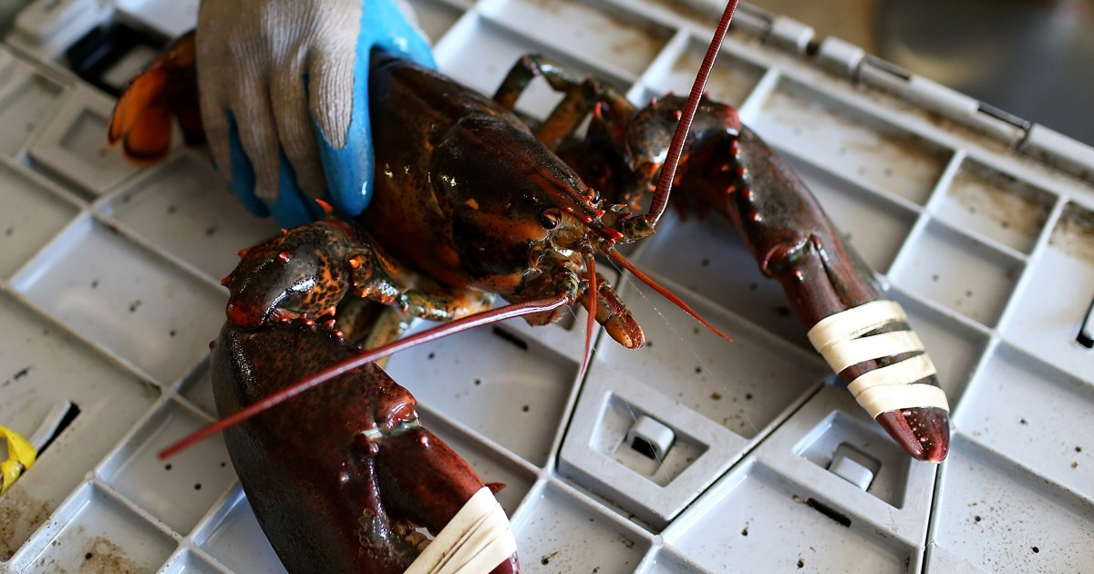 China-linked disinformation campaign blames Covid on Maine lobsters