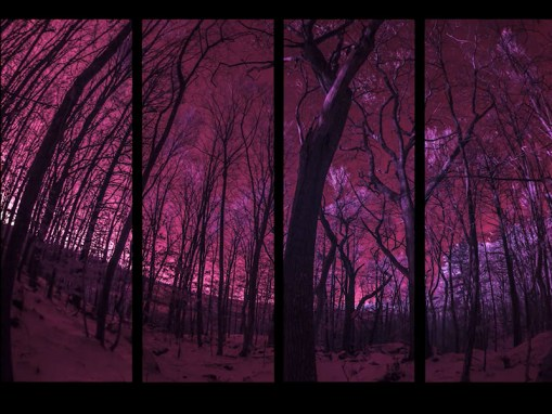 INFRARED TIMELAPSE PANELS