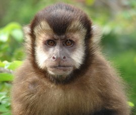 Monkeys 13