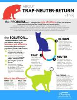 Cats and dogs - TNR infographic