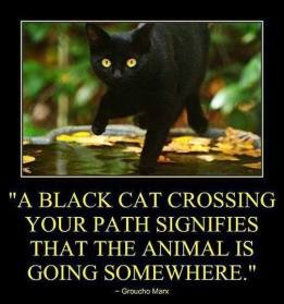 Cats - Black crossing path signifies animal is going somewhere