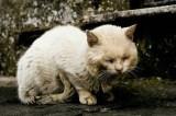 Cats - Street cat