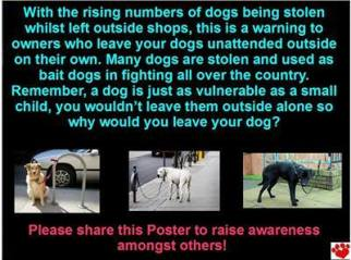 Dogs - Fighting warning pets stolen for bait dogs