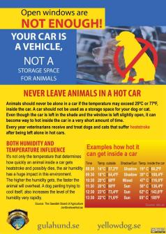 Dogs - Medical hot car safety 10
