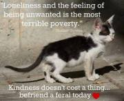 Homeless pets - Abandoned is the worst feeling