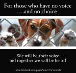 Homeless pets - For those who have no voice
