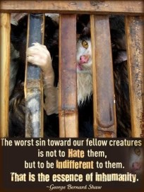 Homeless pets - Help worse sin is indifference