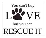 Homeless pets - Help you can't buy love but you can rescue it 01