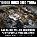 Homeless pets - Kill 10,000 dogs died today