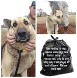 Homeless pets - Kill black bags GSD