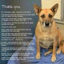 Homeless pets - Kill thank you