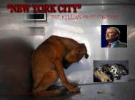 Homeless pets - NYC AC&C killed dog