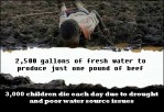 Factory farming - cattle economics 2,500 gallons of water to produce one pound