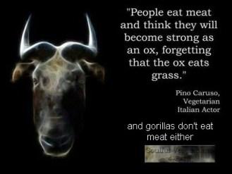 Vegan - fallacies oxen don't eat meat