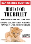 Lions - Poster for canned hunting 10