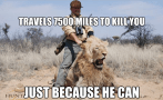 Lions - Travels to kill because can
