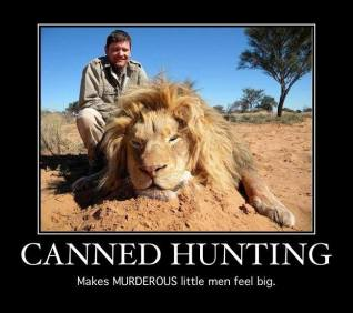 Lions - Trophy hunting 05