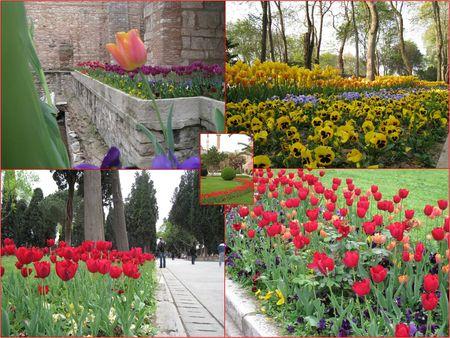 Istanbul___les_tulipes