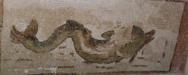 néréide sur un dauphin thermes de smois thyna sfax
