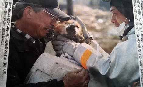 animal donations japan