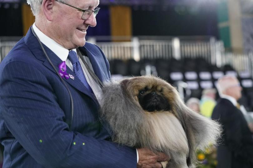 David Fitzpatrick, owner, breeder and handler, holds Wasabi, a Pekingese, after the dog won Best in Show at the Westminster Kennel Club dog show, Sunday, June 13, 2021, in Tarrytown, N.Y. (AP Photo/Kathy Willens)