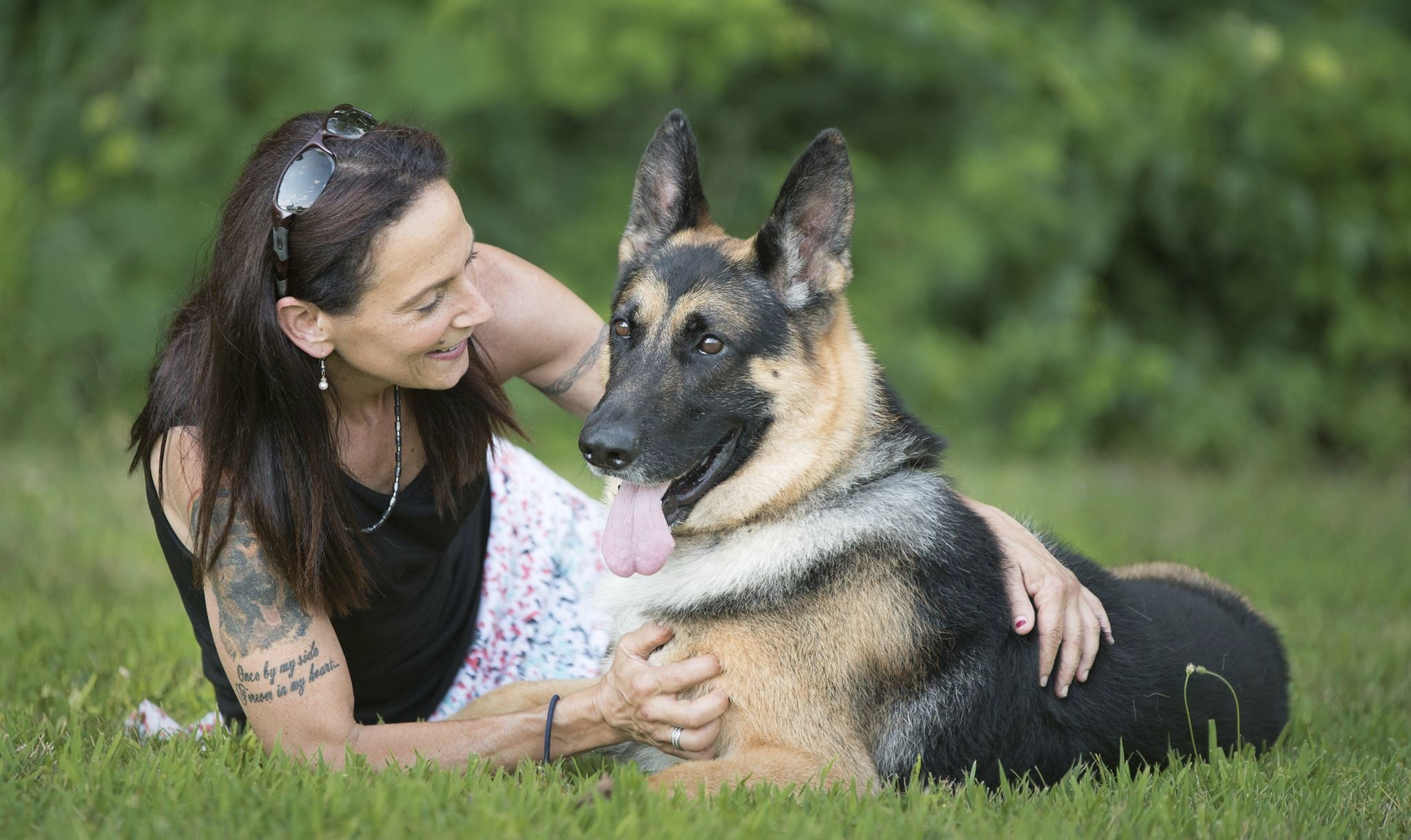 Dogged Badly Wrecked German Shepherd Shows At Westminster