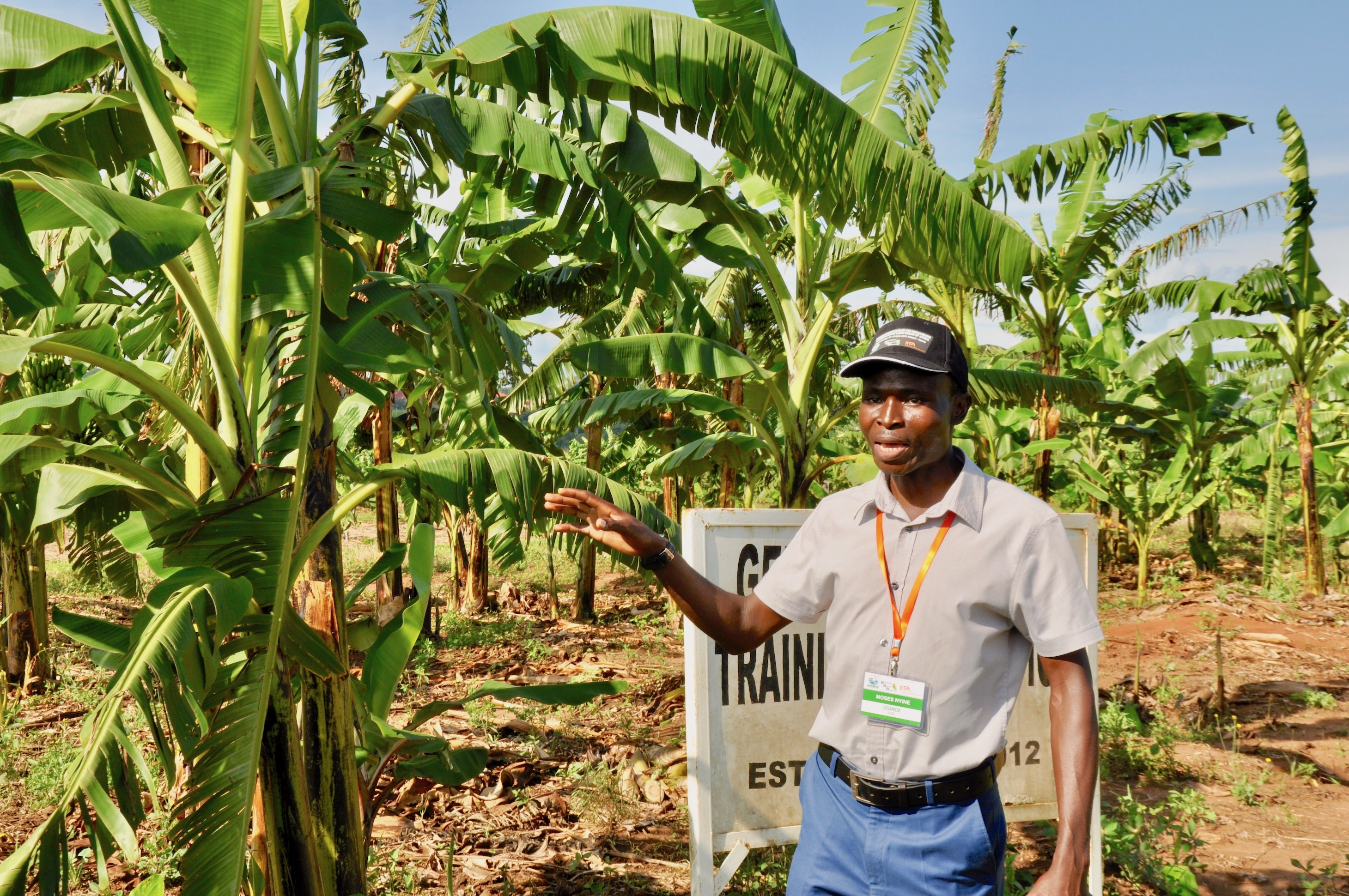 """The International Institute of Tropical Agriculture (IITA), Ibadan and Oyo state government on Thursday launched a programme tagged: ''Start Them Early Programme"""" (STEP) for secondary school students in the state. The News Agency of Nigeria reports that the programme tagged: 'STEP in Oyo State and the inauguration of STEP Agri-business training facility for youths was […]"""