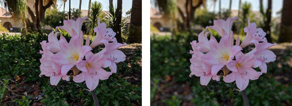 flower-comp-s.jpg